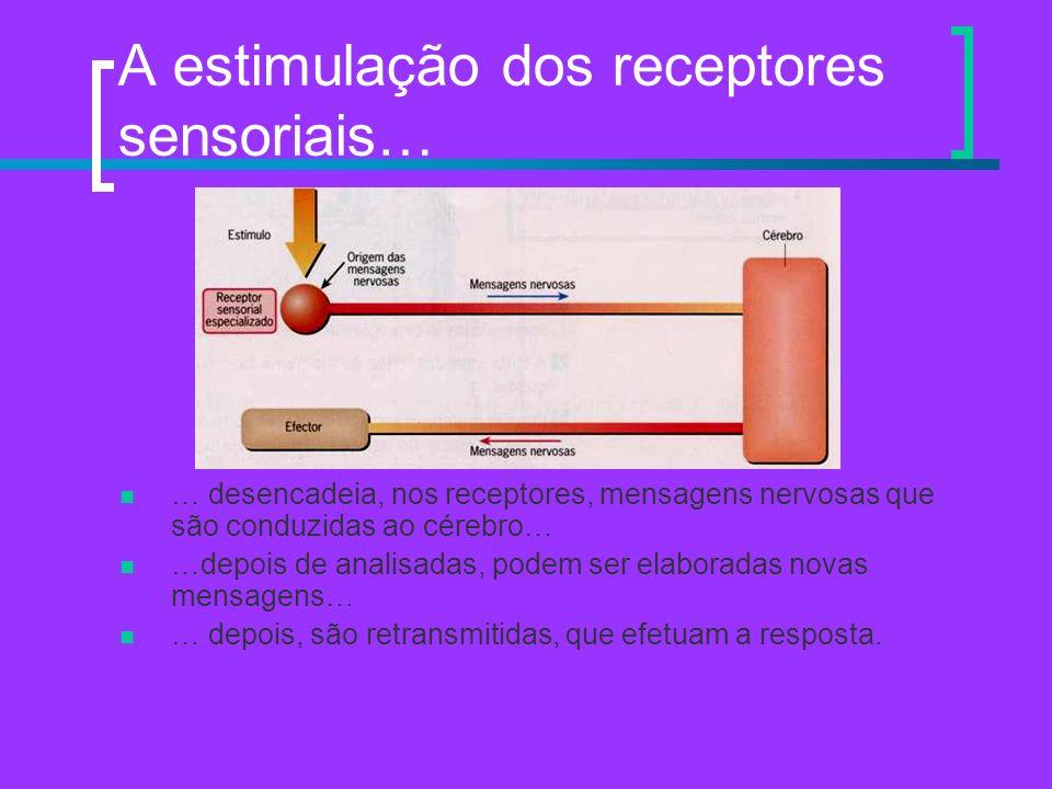 A estimulação dos receptores sensoriais…