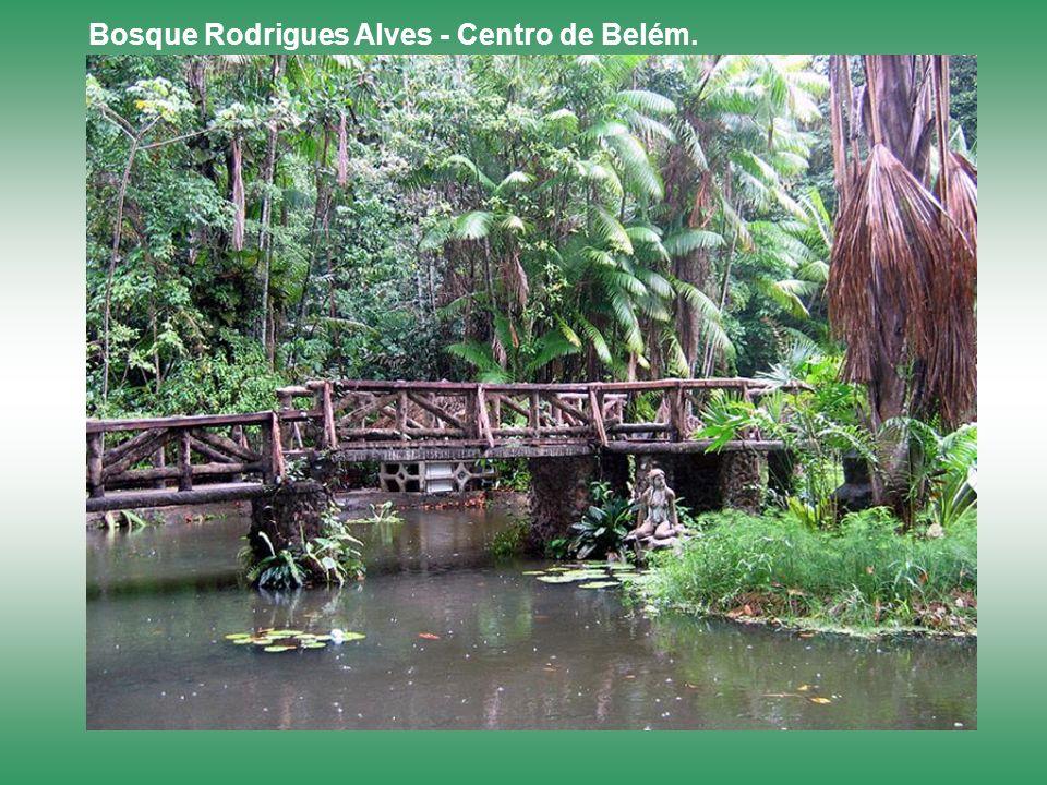 Bosque Rodrigues Alves - Centro de Belém.
