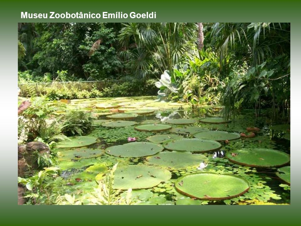Museu Zoobotânico Emílio Goeldi