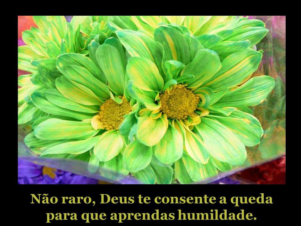 Não raro, Deus te consente a queda para que aprendas humildade.
