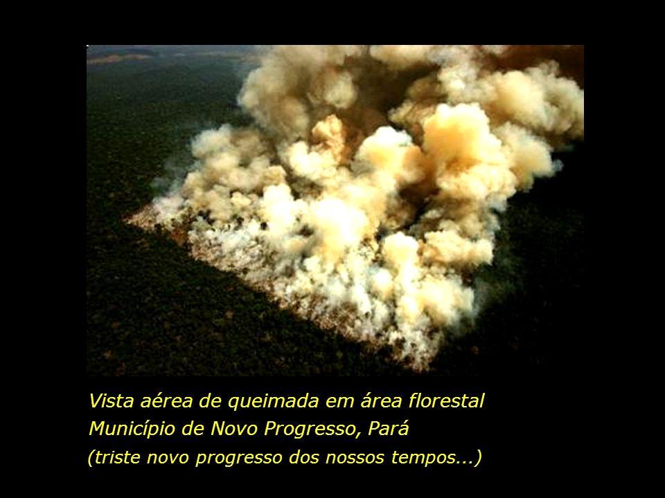 Vista aérea de queimada em área florestal
