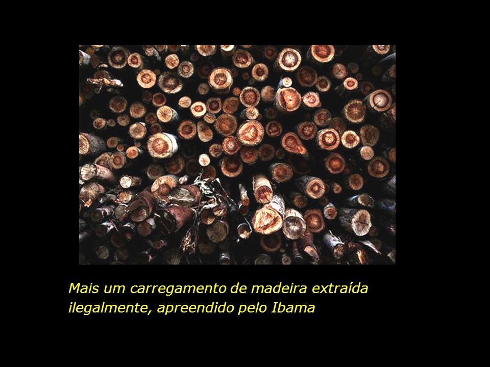 Mais um carregamento de madeira extraída ilegalmente, apreendido pelo Ibama