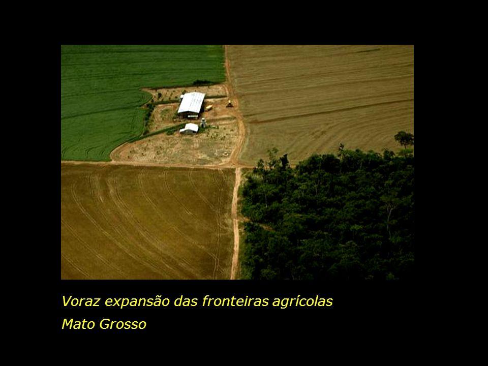 Voraz expansão das fronteiras agrícolas
