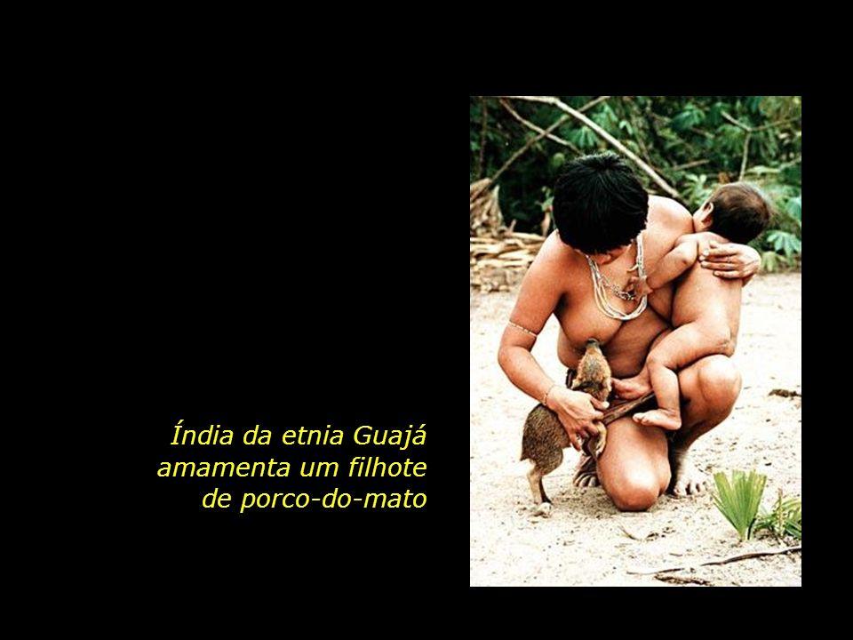 Índia da etnia Guajá amamenta um filhote de porco-do-mato