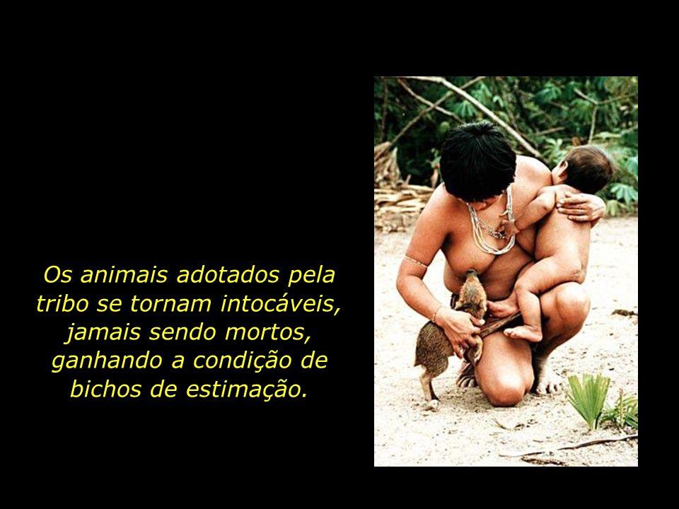 Os animais adotados pela tribo se tornam intocáveis, jamais sendo mortos, ganhando a condição de bichos de estimação.