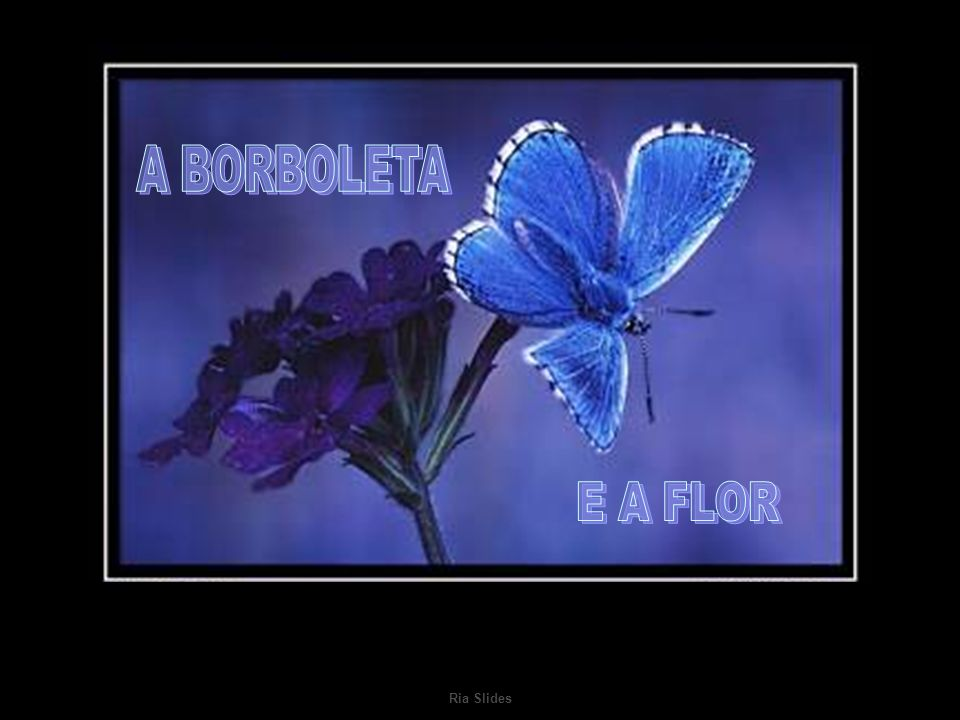 A BORBOLETA E A FLOR Ria Slides