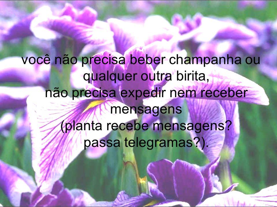 você não precisa beber champanha ou qualquer outra birita, não precisa expedir nem receber mensagens (planta recebe mensagens.