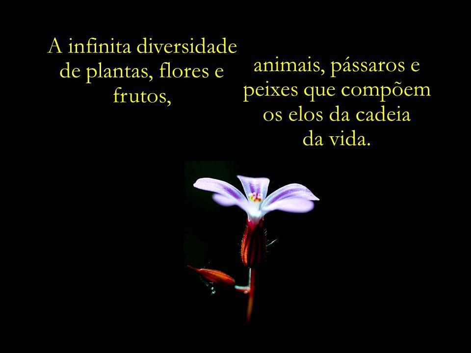 A infinita diversidade de plantas, flores e frutos,