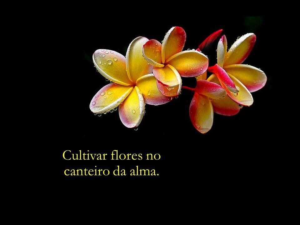Cultivar flores no canteiro da alma.