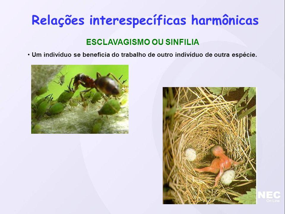 Relações interespecíficas harmônicas ESCLAVAGISMO OU SINFILIA