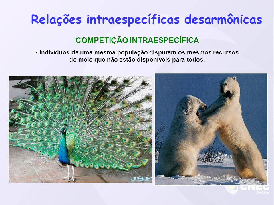 Relações intraespecíficas desarmônicas COMPETIÇÃO INTRAESPECÍFICA