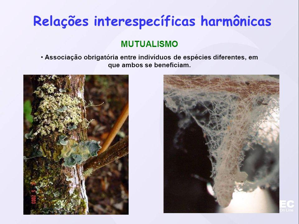 Relações interespecíficas harmônicas
