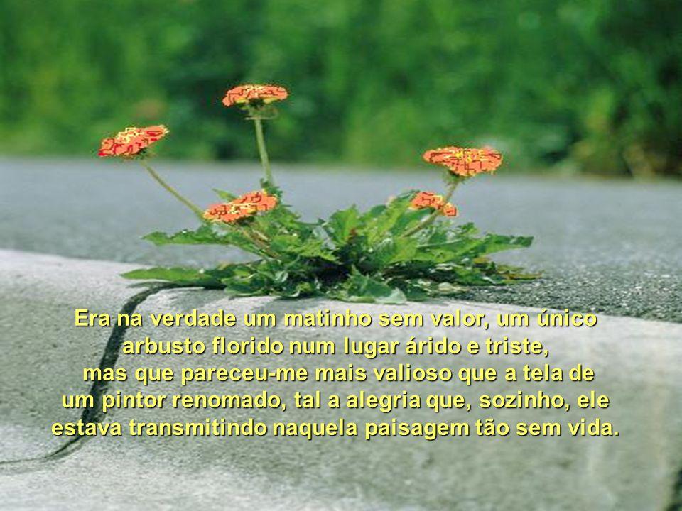 Era na verdade um matinho sem valor, um único arbusto florido num lugar árido e triste,