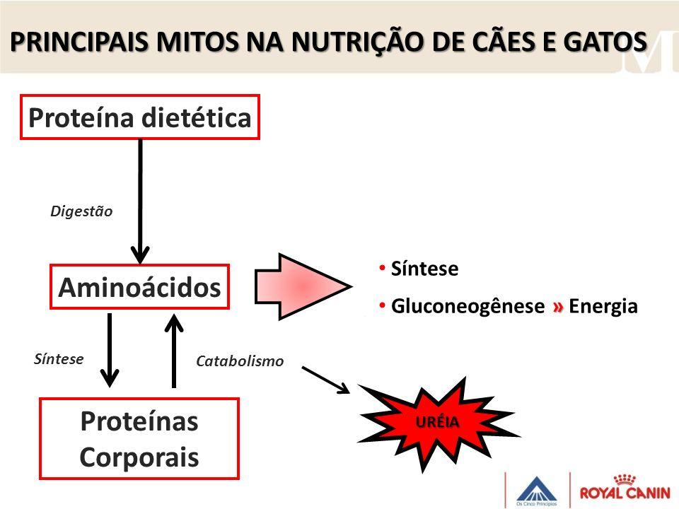 Proteína dietética Aminoácidos Proteínas Corporais