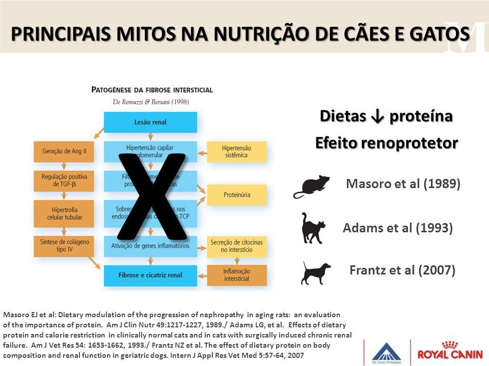 X PRINCIPAIS MITOS NA NUTRIÇÃO DE CÃES E GATOS Dietas ↓ proteína