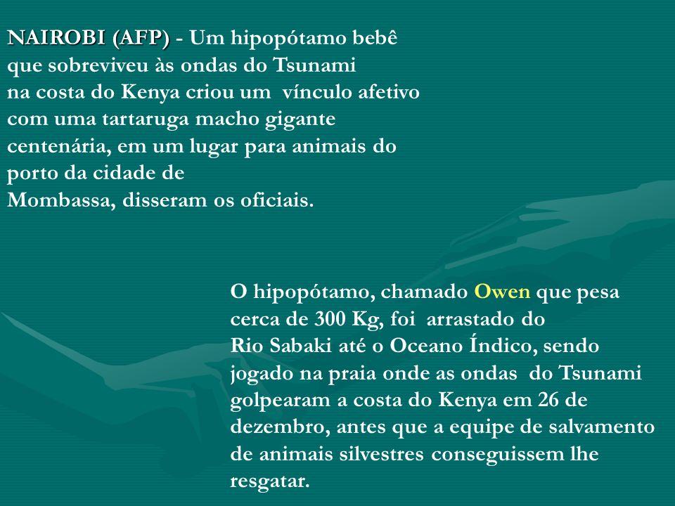 NAIROBI (AFP) - Um hipopótamo bebê que sobreviveu às ondas do Tsunami na costa do Kenya criou um vínculo afetivo com uma tartaruga macho gigante centenária, em um lugar para animais do porto da cidade de Mombassa, disseram os oficiais.