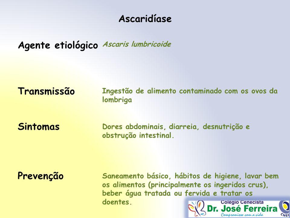 Ascaridíase Agente etiológico Transmissão Sintomas Prevenção