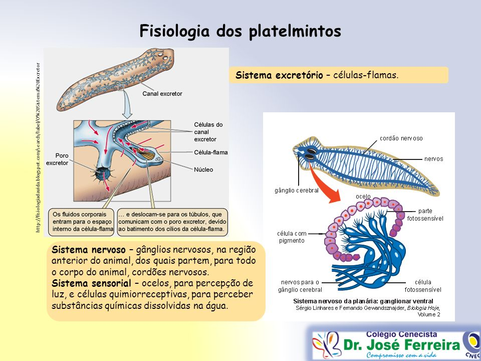 Fisiologia dos platelmintos