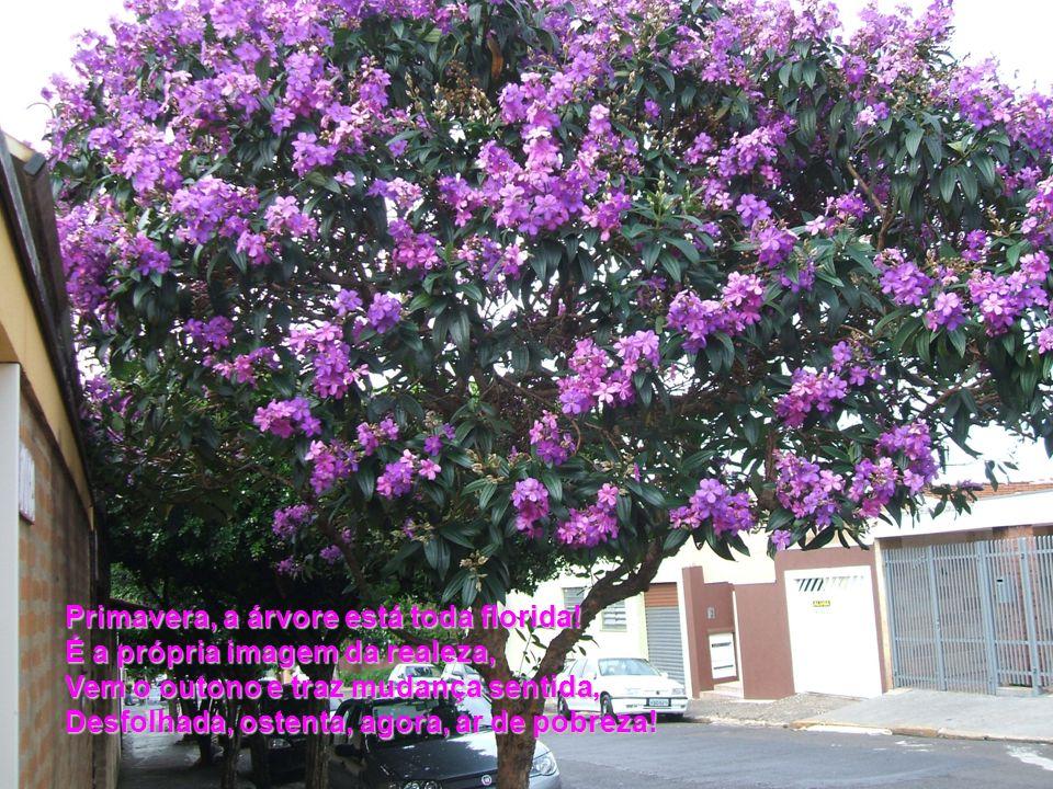 Primavera, a árvore está toda florida!