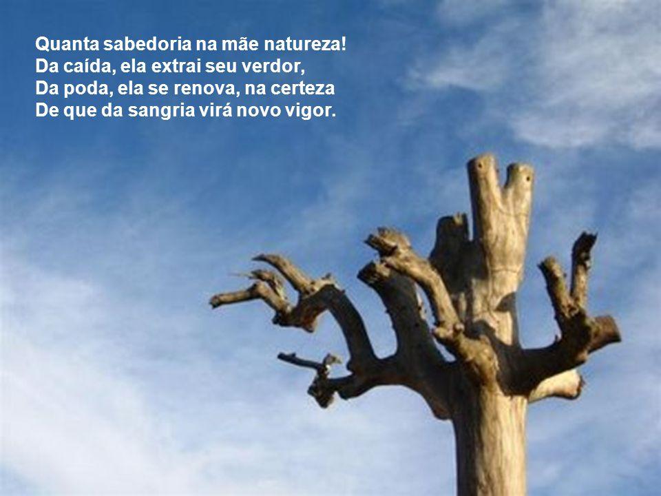 Quanta sabedoria na mãe natureza!