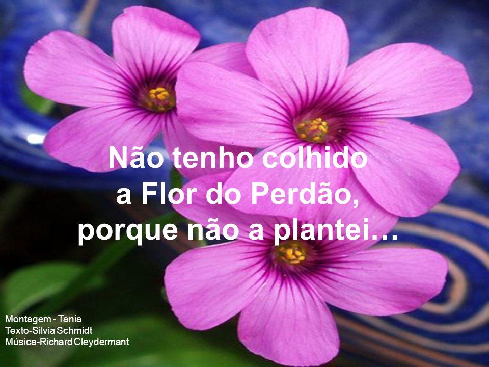 Não tenho colhido a Flor do Perdão, porque não a plantei…