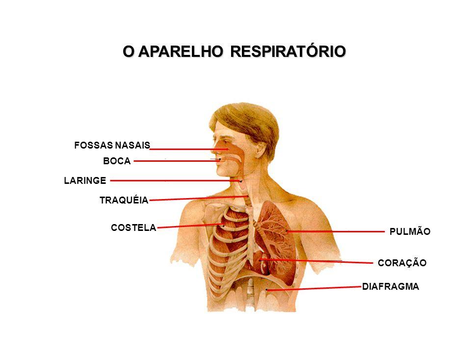 O APARELHO RESPIRATÓRIO