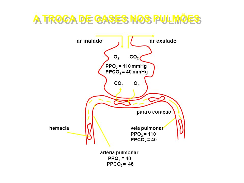 O2 CO2 PPO2 = 110 mmHg PPCO2 = 40 mmHg CO2 O2