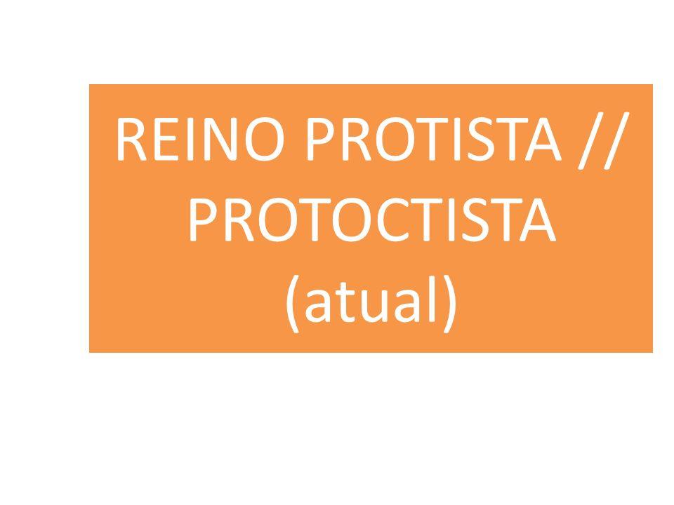 REINO PROTISTA // PROTOCTISTA (atual)
