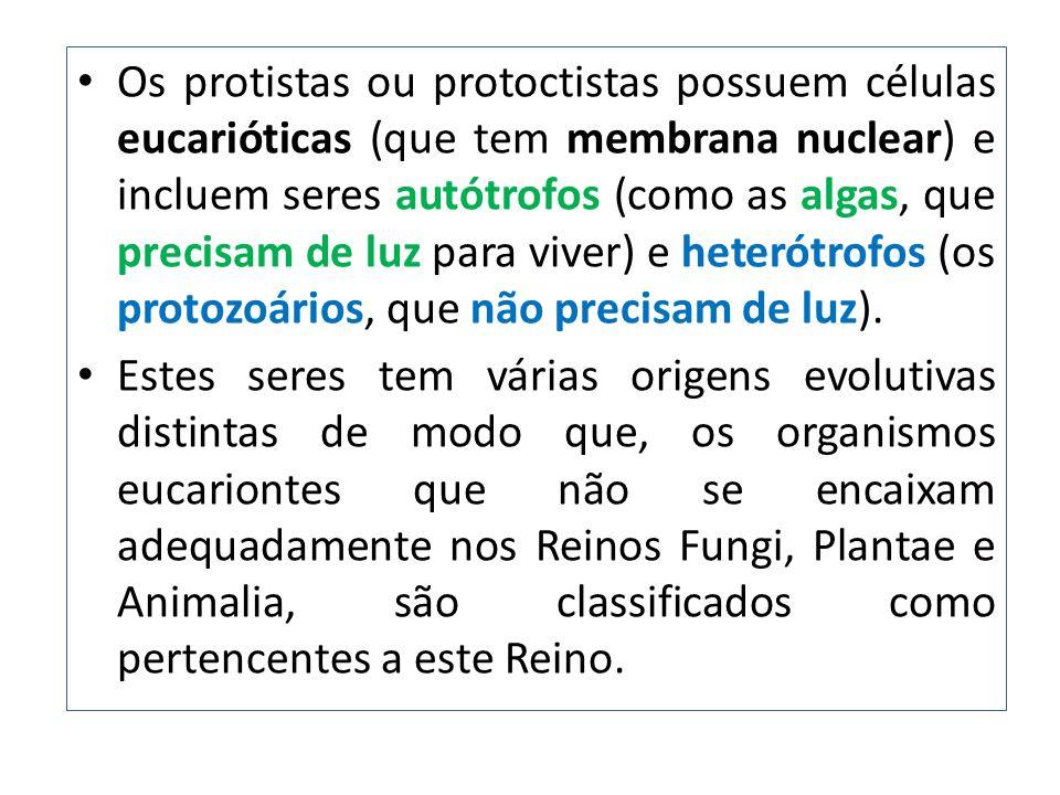 Os protistas ou protoctistas possuem células eucarióticas (que tem membrana nuclear) e incluem seres autótrofos (como as algas, que precisam de luz para viver) e heterótrofos (os protozoários, que não precisam de luz).