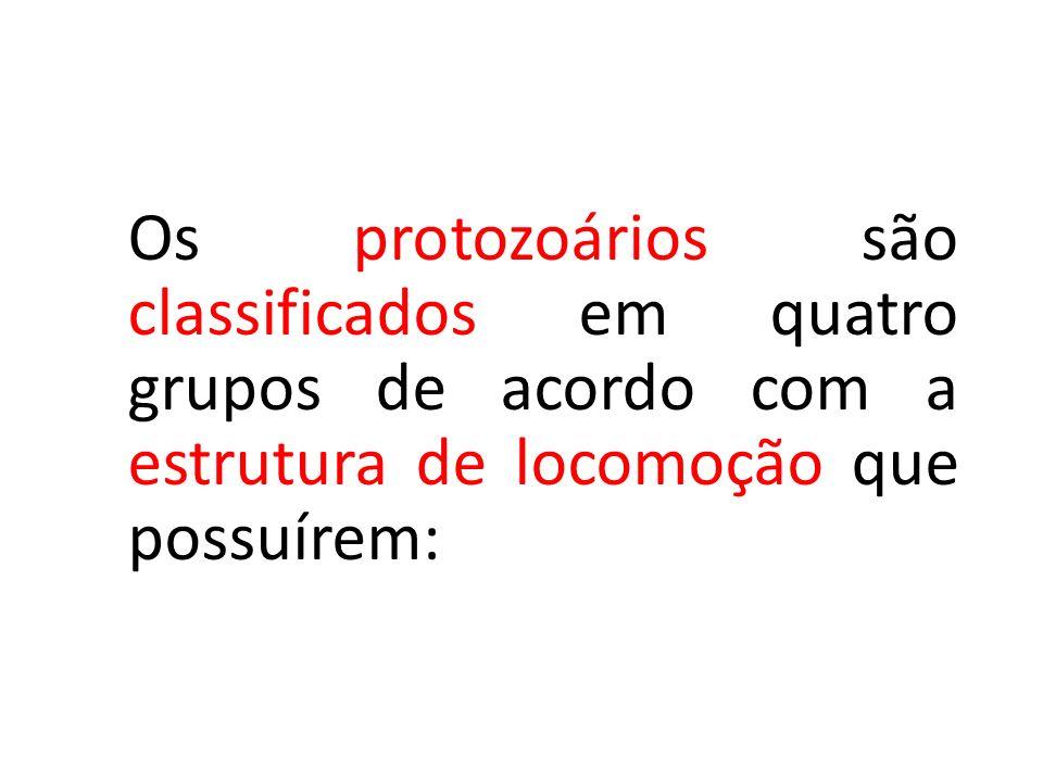 Os protozoários são classificados em quatro grupos de acordo com a estrutura de locomoção que possuírem: