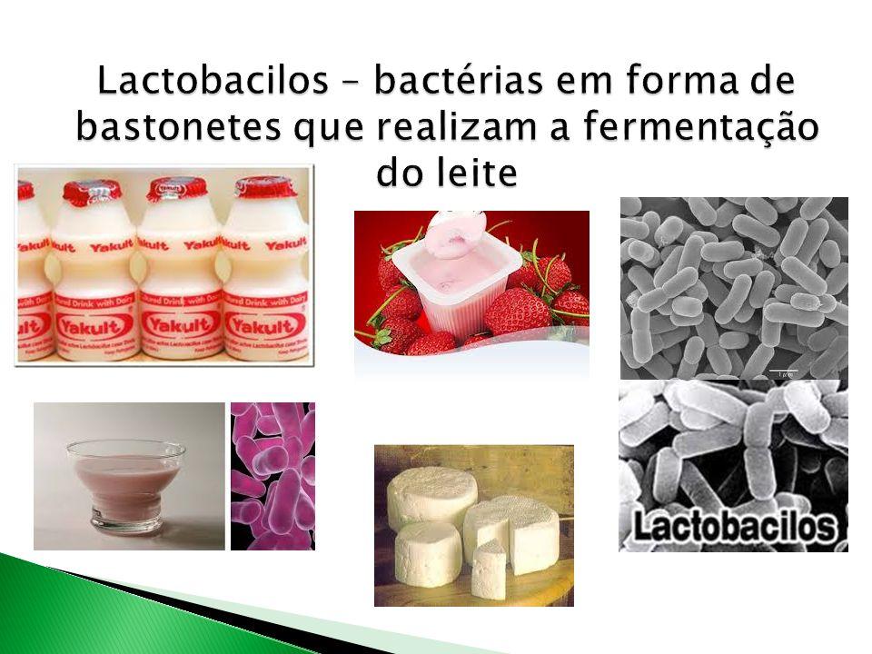 Lactobacilos – bactérias em forma de bastonetes que realizam a fermentação do leite