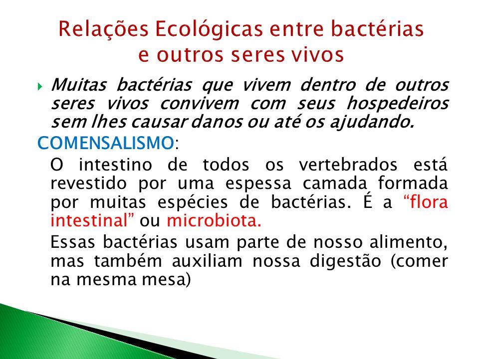 Relações Ecológicas entre bactérias e outros seres vivos