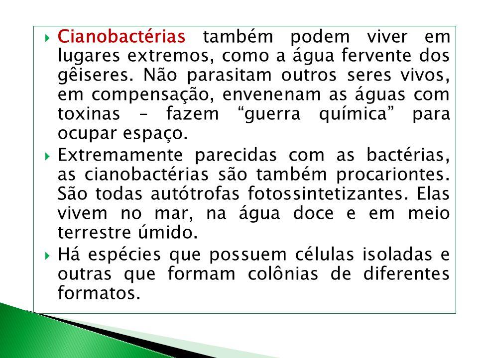 Cianobactérias também podem viver em lugares extremos, como a água fervente dos gêiseres. Não parasitam outros seres vivos, em compensação, envenenam as águas com toxinas – fazem guerra química para ocupar espaço.