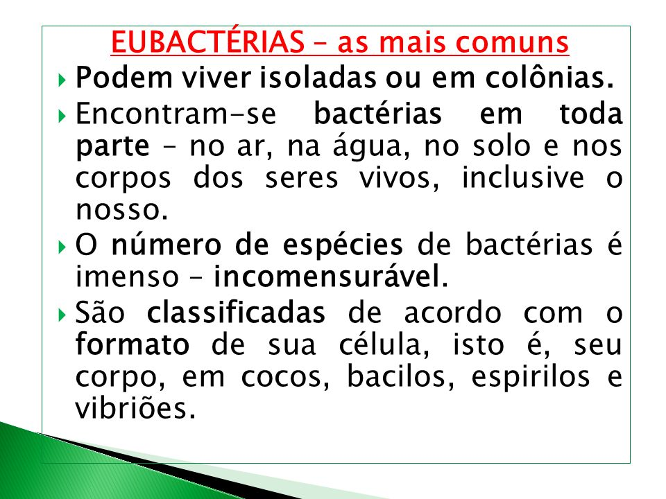 EUBACTÉRIAS – as mais comuns