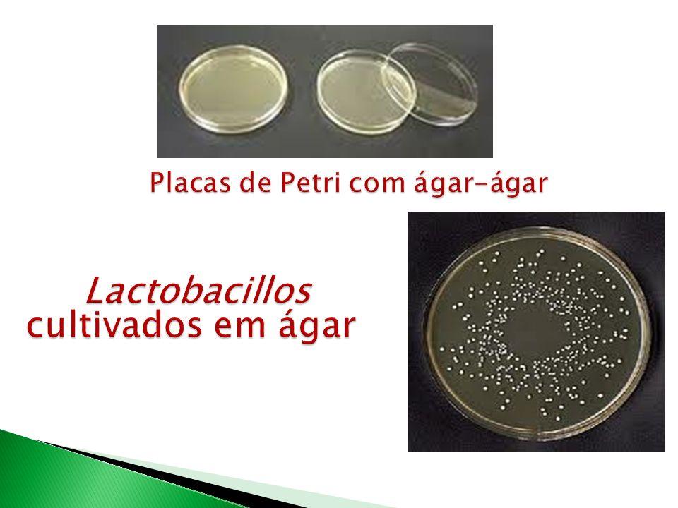 Placas de Petri com ágar-ágar