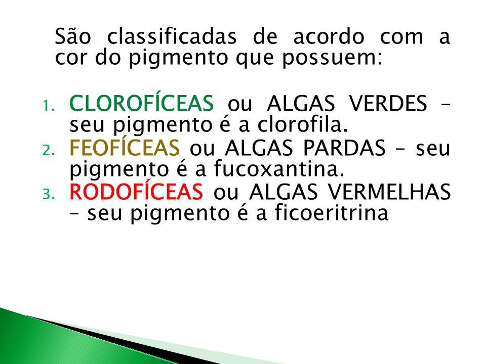 São classificadas de acordo com a cor do pigmento que possuem: