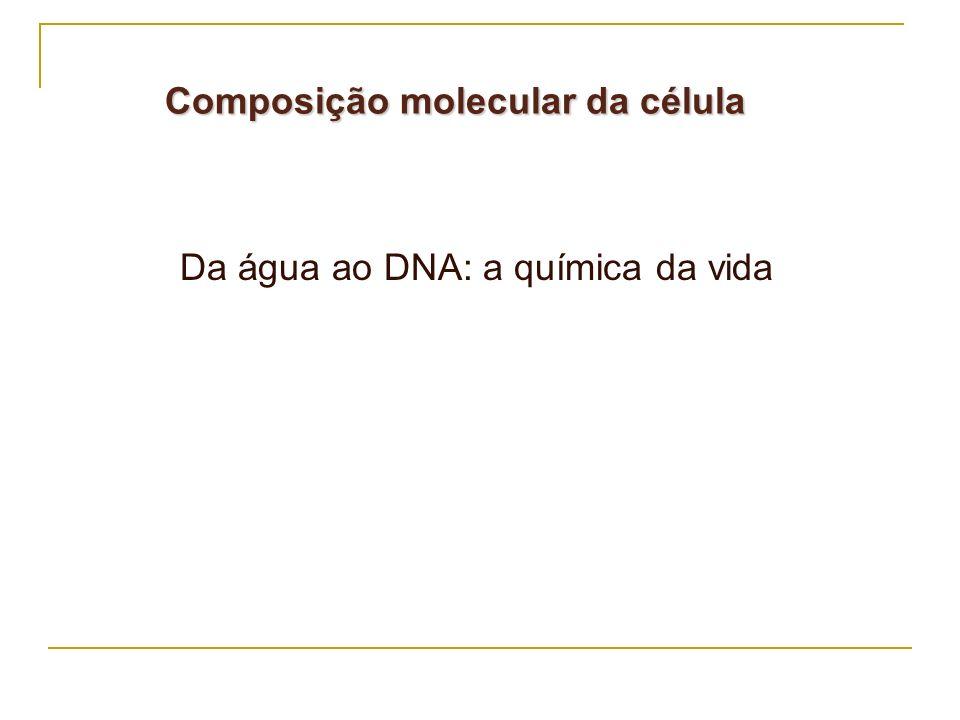 Composição molecular da célula
