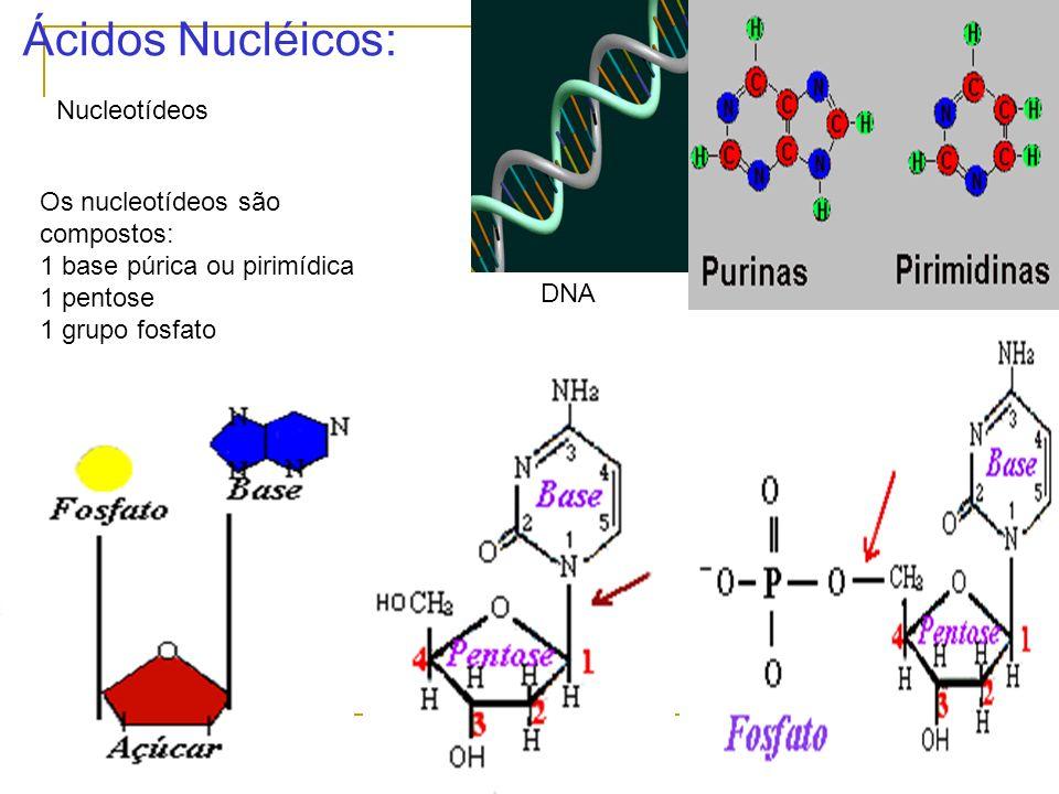 Ácidos Nucléicos: Nucleotídeos Os nucleotídeos são compostos: