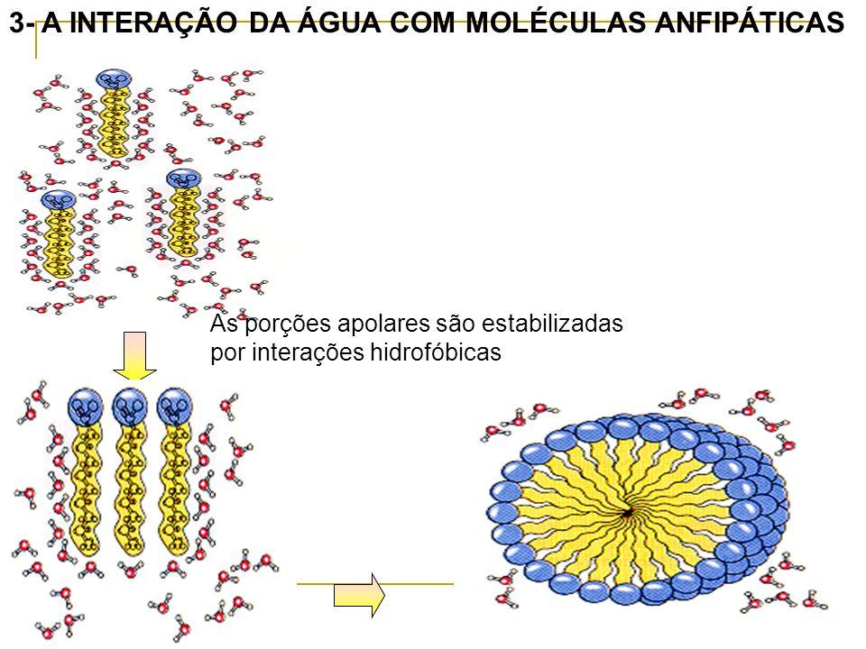 3- A INTERAÇÃO DA ÁGUA COM MOLÉCULAS ANFIPÁTICAS