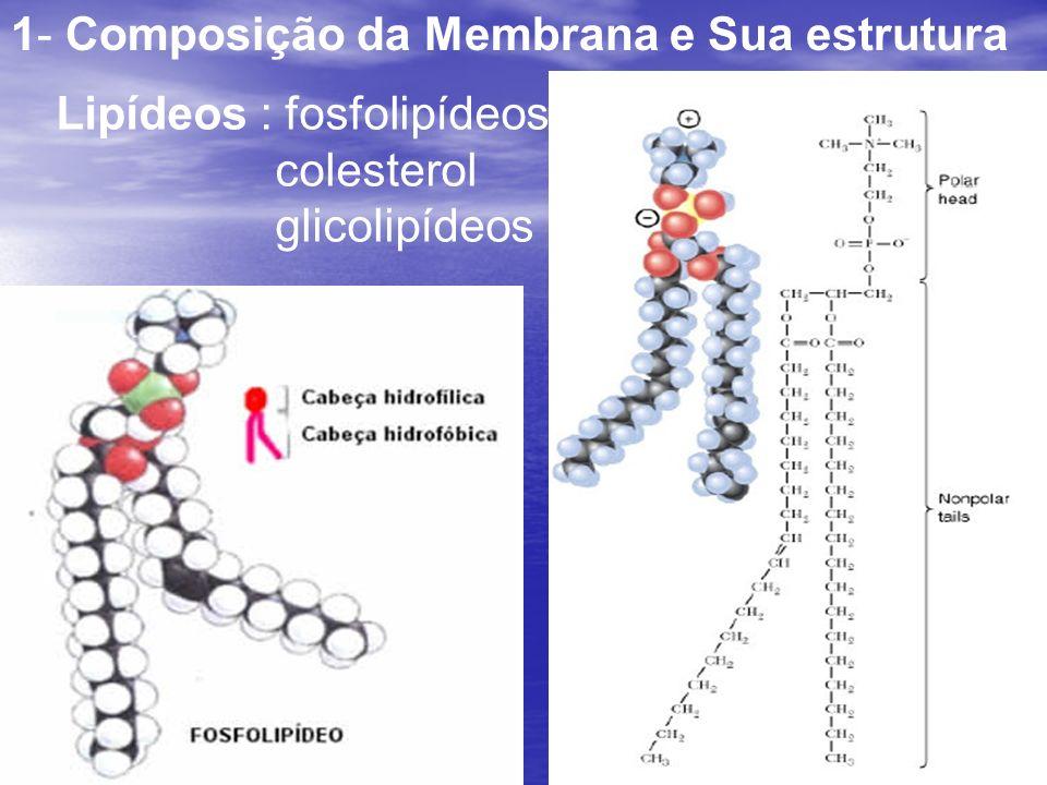 1- Composição da Membrana e Sua estrutura