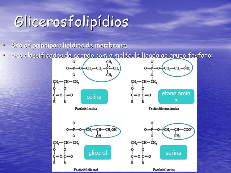 Glicerosfolipídios São os principais lipídios de membrana;