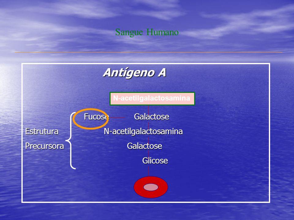 Antígeno A Sangue Humano Fucose Galactose