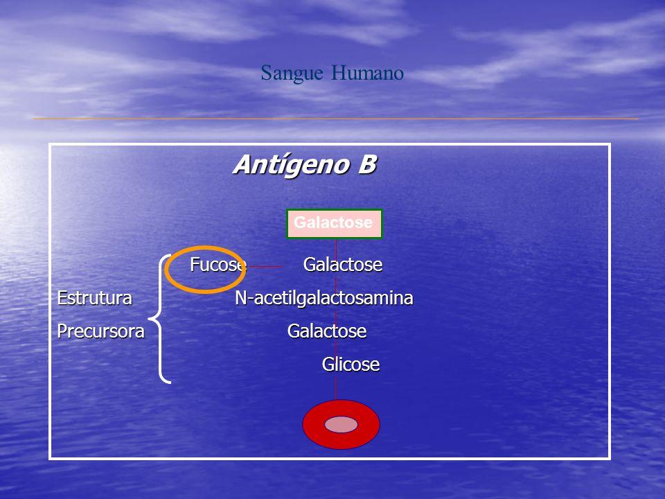 Antígeno B Sangue Humano Fucose Galactose