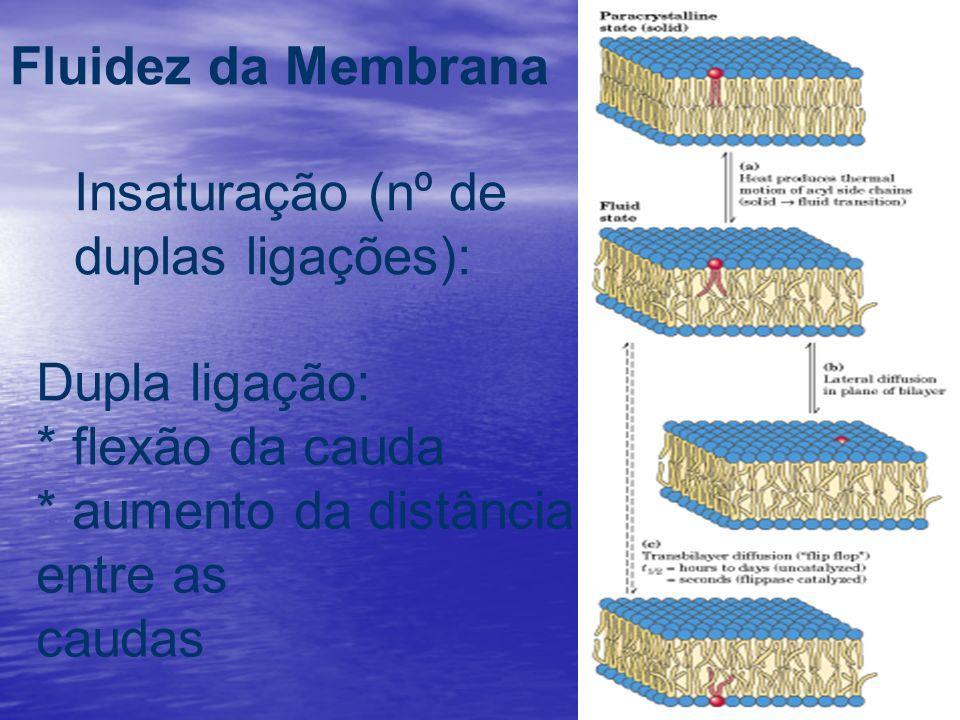 Fluidez da Membrana Insaturação (nº de duplas ligações): Dupla ligação: * flexão da cauda. * aumento da distância entre as.