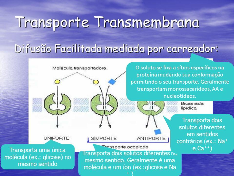 Transporta uma única molécula (ex.: glicose) no mesmo sentido