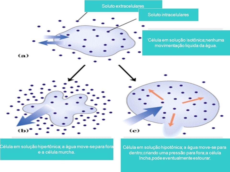 Soluto extracelulares