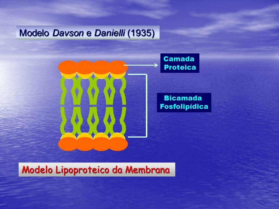 Modelo Davson e Danielli (1935)