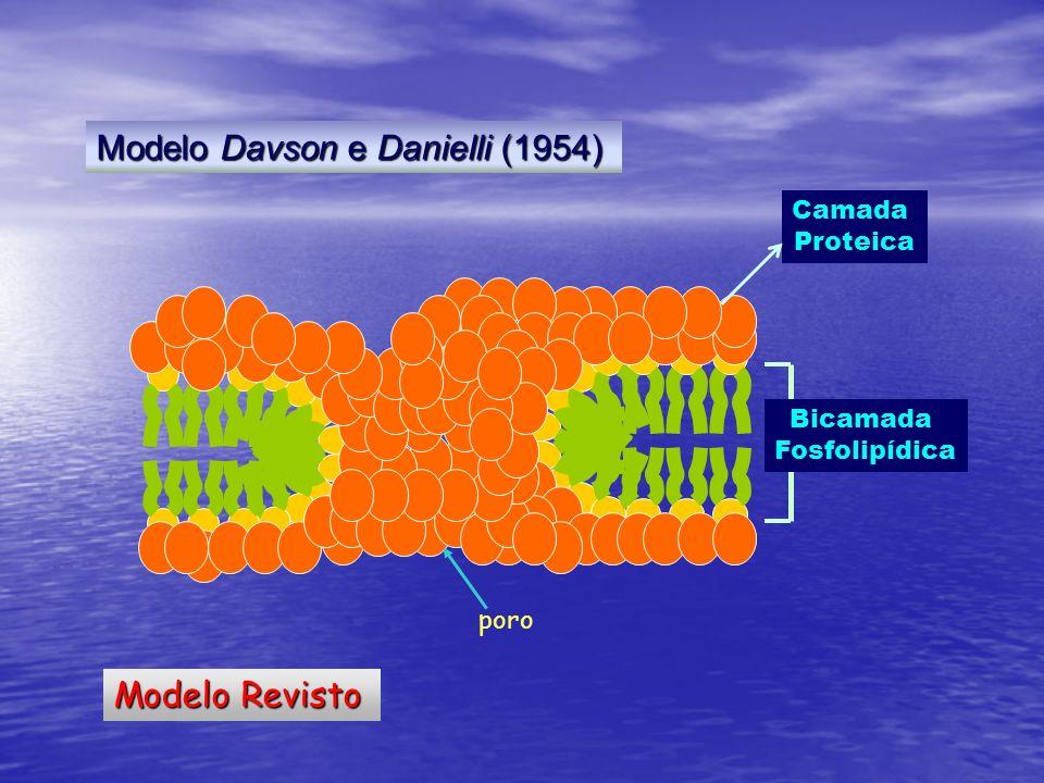 Modelo Davson e Danielli (1954)