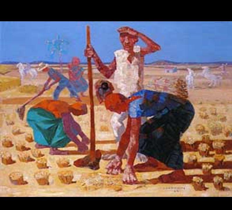 Portinari – colheita de arroz