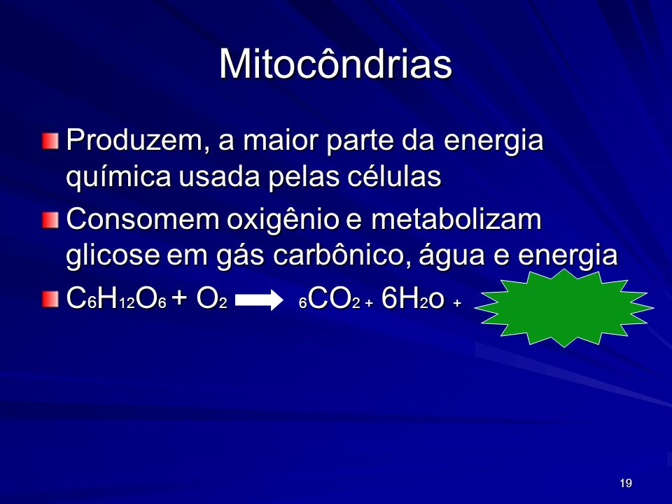 Mitocôndrias Produzem, a maior parte da energia química usada pelas células.
